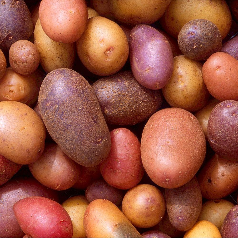 Empty the Fridge - 6 voedingswaren die je best niet invriest - groenten