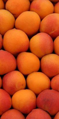 fruit-144753_640