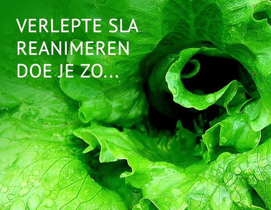 Empty the fridge - Sla reanimeren