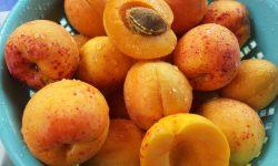 apricots-168502